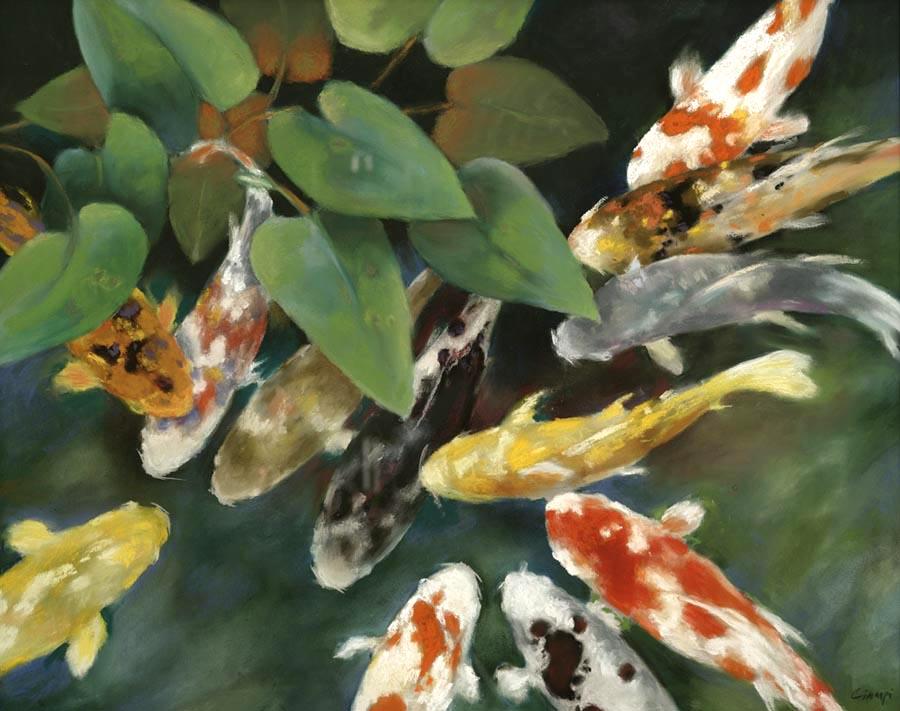 Fine art print editions of koi ponds lilies and lotus for Koi fish pond lotus